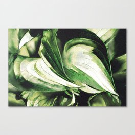 Hosta Hugs Canvas Print