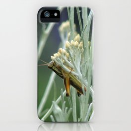 Grasshopper on sage iPhone Case