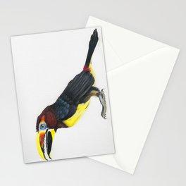 Green Aracari - Pteroglossus viridis Stationery Cards