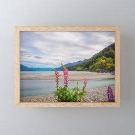 Lupin flowers in alpine scenery at Kinloch, NZ. Framed Mini Art Print