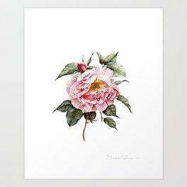 Wilting Pink Rose Watercolor Art Print
