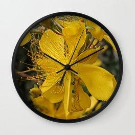 Hypericum flower closeup Wall Clock