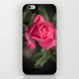 Rose for you iPhone Skin