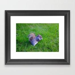 Squirrel 3 Framed Art Print