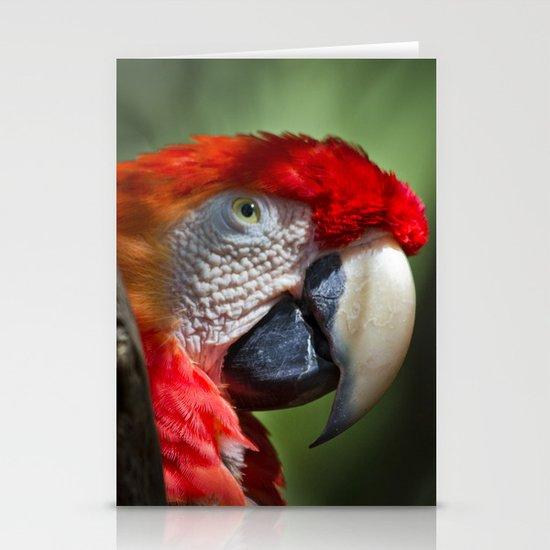 Scarlet Macaw Stationery Cards