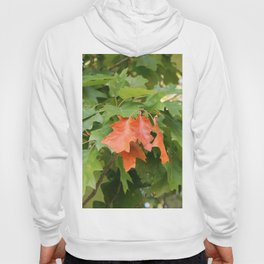 The leaves of early autumn Hoody
