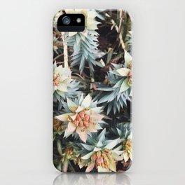 orange succulent iPhone Case