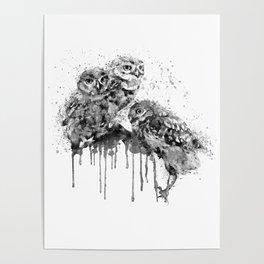 Three Cute Monochrome Owls Poster