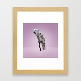Cockattoo Framed Art Print