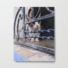Peeking Kitty, Chefchaouen, Morocco Metal Print