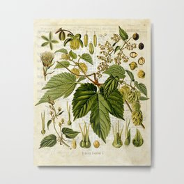 Common Hop Botanical Print on Vintage almanac collage Metal Print