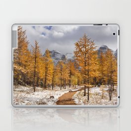 II - Larch trees in fall after first snow, Banff NP, Canada Laptop & iPad Skin