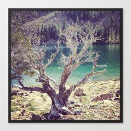 Dead Fall Lakes, California Canvas Print