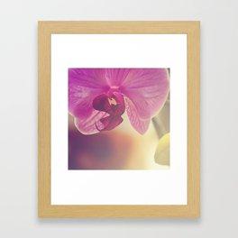 Morning Orchids Framed Art Print