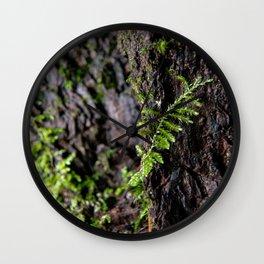 Moss growing up a tree Wall Clock