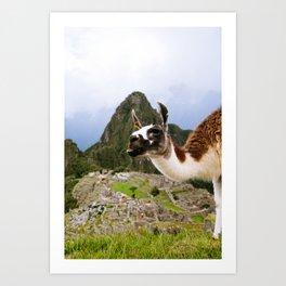 Llama in Machu Picchu Art Print