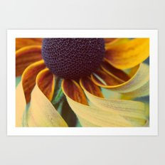 Black eyed susan 03 Art Print