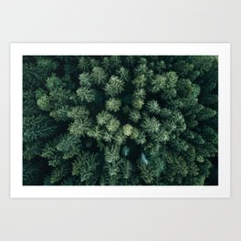 Forest from above - Landscape Photography Art Print