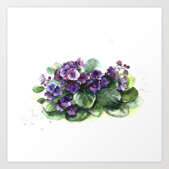 Senpolia viola violet flowers watercolor Art Print