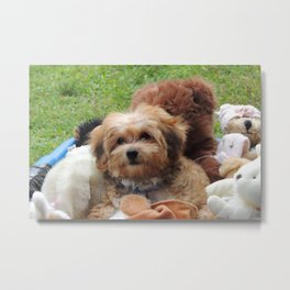 Copper the Havapookie as a Puppy Metal Print
