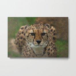 Cheetah Stare Textured Metal Print
