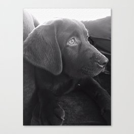 Labrador Puppy Portrait Canvas Print