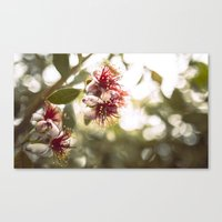 botanical Canvas Prints featuring Botanical  by dibec