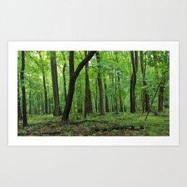 Rainy Forest Trails Art Print