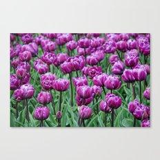 purple spring Canvas Print