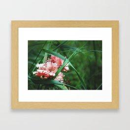 Lace roses Framed Art Print