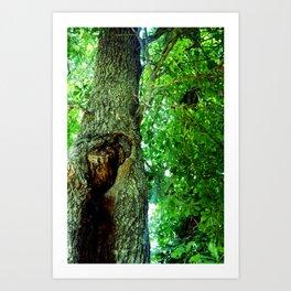 treehole2 Art Print