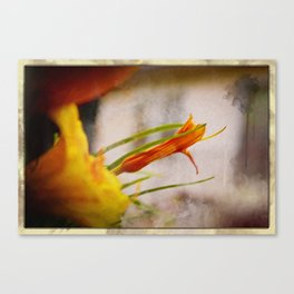 Dawn Lily Canvas Print