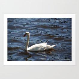 Swimming Swan Art Print