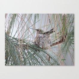 Pine Veil Nesting Canvas Print