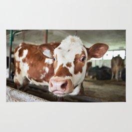 Calf in stalls at farm Rug