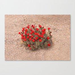 Sandia Cactus Flowers Canvas Print