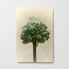 Onion flower Metal Print