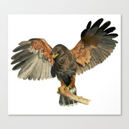Hawk Flapping Wings Watercolor Painting Canvas Print