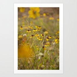 Yellow Wildflowers Art Print