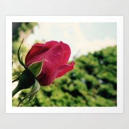 Roza Art Print