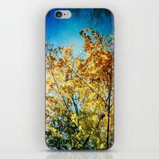 Rainbow of leaves iPhone & iPod Skin