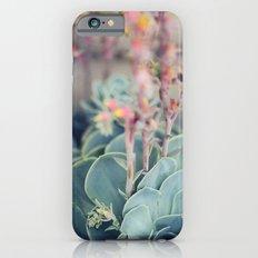 Echeveria #4 Slim Case iPhone 6s