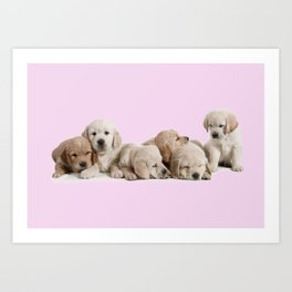 Golden Retriever Puppies Art Print