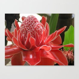 Laos Flower Canvas Print