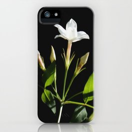 Close Up Of Jasminum Officinale iPhone Case