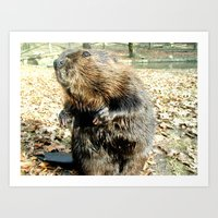 beaver Art Prints featuring BEAVER by Sofia Youshi