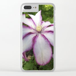 Clematis - Stunning two-tone flowers Clear iPhone Case