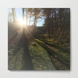 Forest Nature Sunshine Metal Print