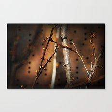 fire sunset tree buds Canvas Print