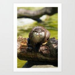 Otter on A Tree Trunk Art Print